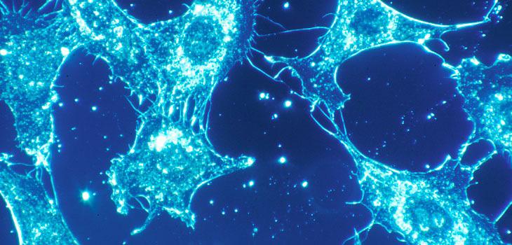 stem_cells